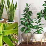 7-plantas-para-refrescar-y-purificar-el-aire-de-tu-casa-%f0%9f%8c%bf