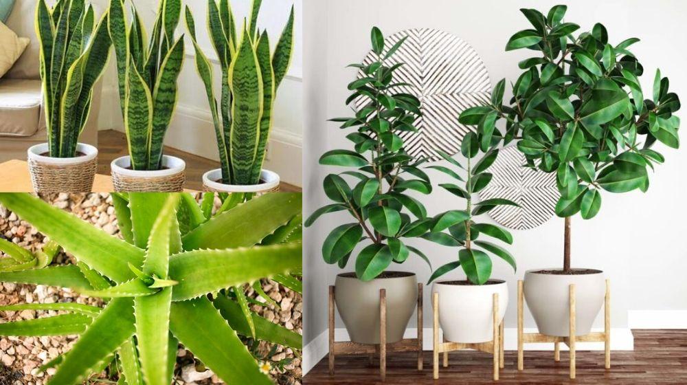 7 plantas para refrescar y purificar el aire de tu casa 🌿