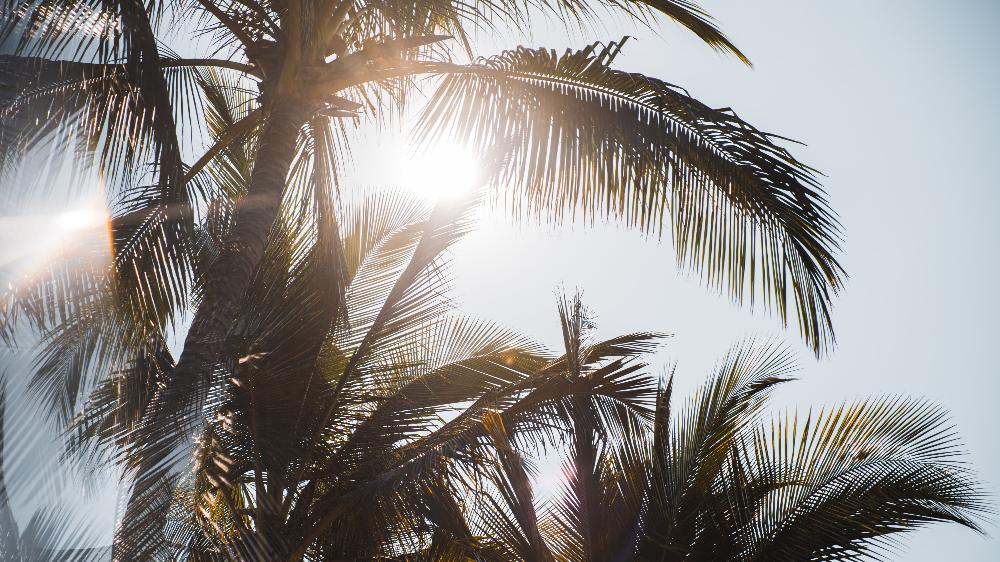 Playas abiertas en México en la nueva normalidad 🏝
