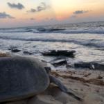 la-anidacion-de-tortugas-marinas-en-cozumel-es-historica-%f0%9f%90%a2%f0%9f%92%99