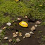 cementerio-de-mascotas-en-cdmx-la-cosecha-de-una-nueva-vida