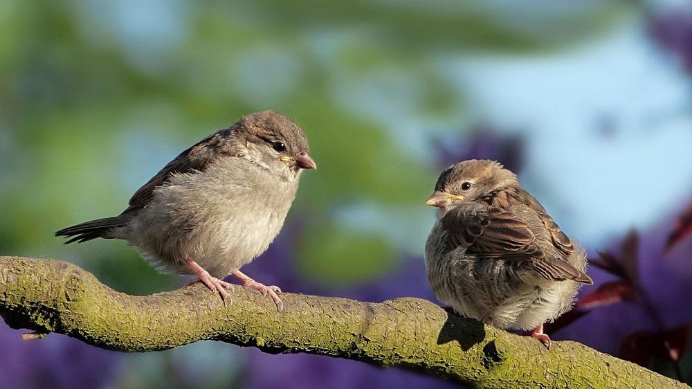 Gorriones, alondras y ¿pelícanos? Estas son las aves de la CDMX 🕊️