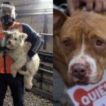 guau-en-tres-anos-han-rescatado-a-mas-de-300-perros-del-metro