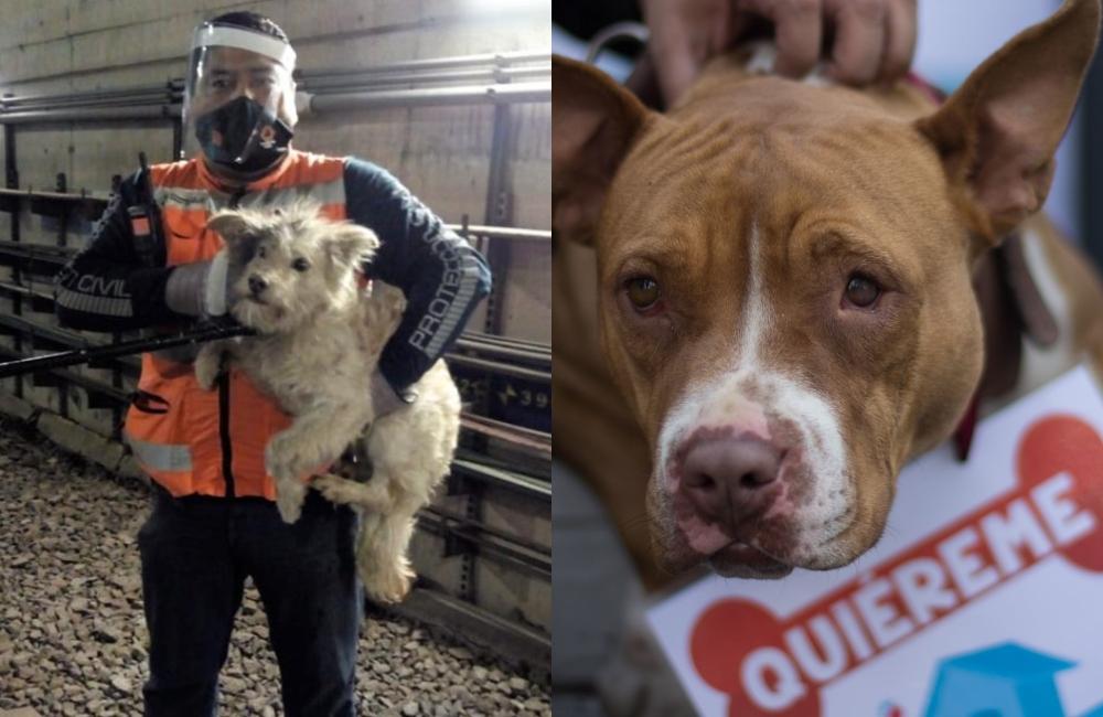 ¡Guau! En tres años han rescatado a más de 300 perros del Metro