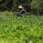 chinamperos-de-xochimilco-con-envio-de-hortilizas-y-mas-a-domicilio-%f0%9f%a5%ac%f0%9f%92%9a