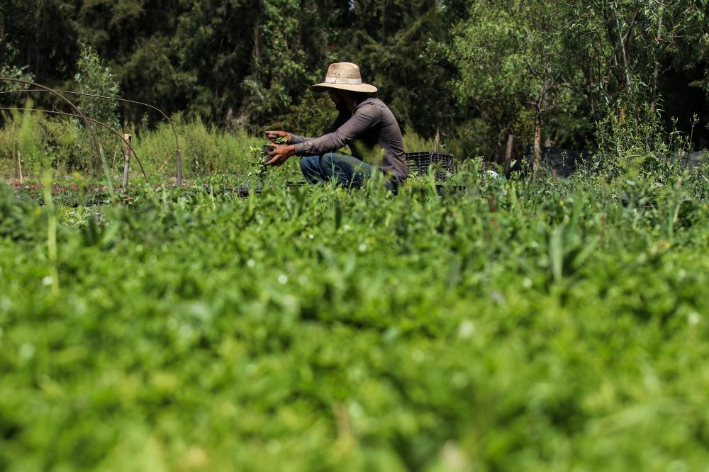 Chinamperos de Xochimilco con envío de hortilizas (y más) a domicilio 🥬💚