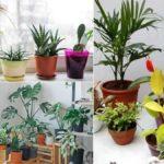 tips-para-proteger-tus-plantas-del-frio-en-la-cdmx-%f0%9f%8d%83%e2%9d%84%ef%b8%8f