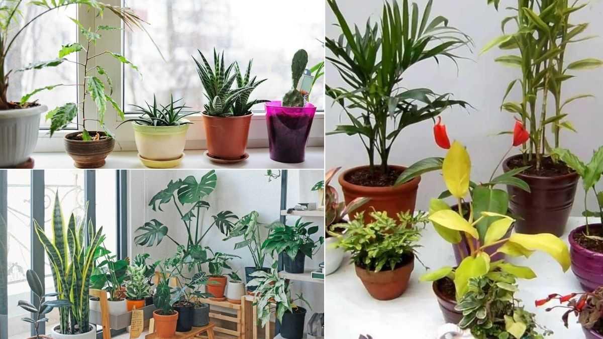 Tips para proteger tus plantas del frío en la CDMX ���