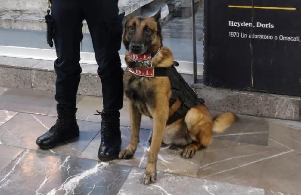Tecla, Polvo y Héctor: conoce a los lomitos policías del Metro