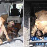 conloslomitosno-rescatan-27-perros-maltratados-de-una-casa