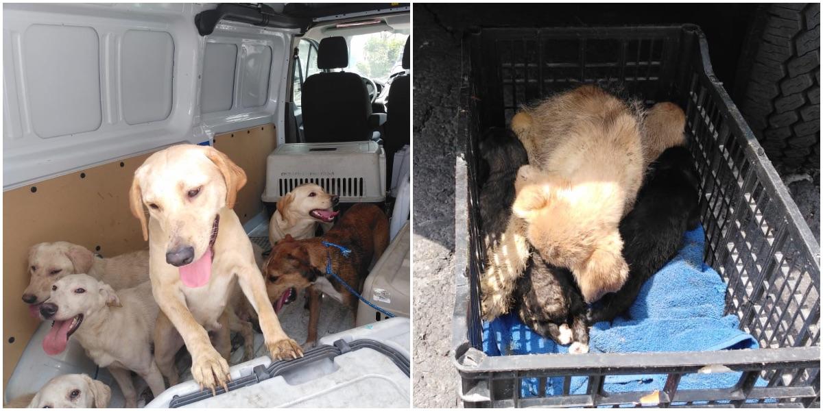 #ConLosLomitosNo: rescatan 27 perros maltratados de una casa