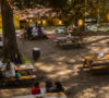 un-nuevo-y-encantador-restaurante-en-medio-del-bosque