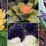 10-plantas-raras-y-bonitas-para-regalar-%f0%9f%a4%a9%f0%9f%8c%b1