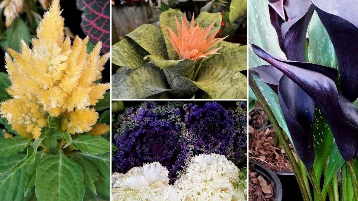 10 plantas raras y bonitas para regalar 🤩🌱
