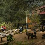 cubo-picnics-en-medio-del-bosque