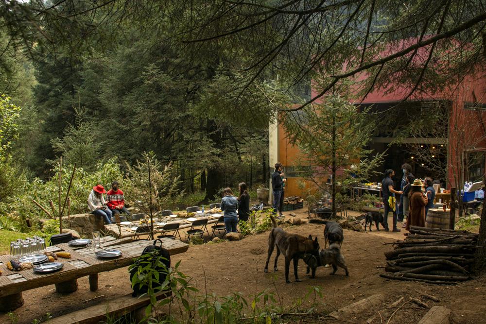 Cubo: pícnics en medio del bosque
