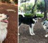 corre-como-el-viento-firulais-parques-para-perros-en-cdmx