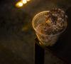 helados-con-alcohol-mezcal-jagermeister-cerveza-carajillo