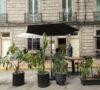 madereros-un-nuevo-restaurante-en-la-san-miguel-chapultepec