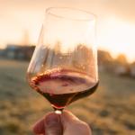 vinos-mexicanos-premiados-que-debes-probar-%f0%9f%8d%b7%f0%9f%a5%b3