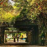 parques-no-tan-conocidos-y-visitados-en-la-cdmx-%f0%9f%91%8c%f0%9f%8f%be