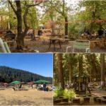 come-en-el-bosque-restaurantes-escondidos-entre-arboles