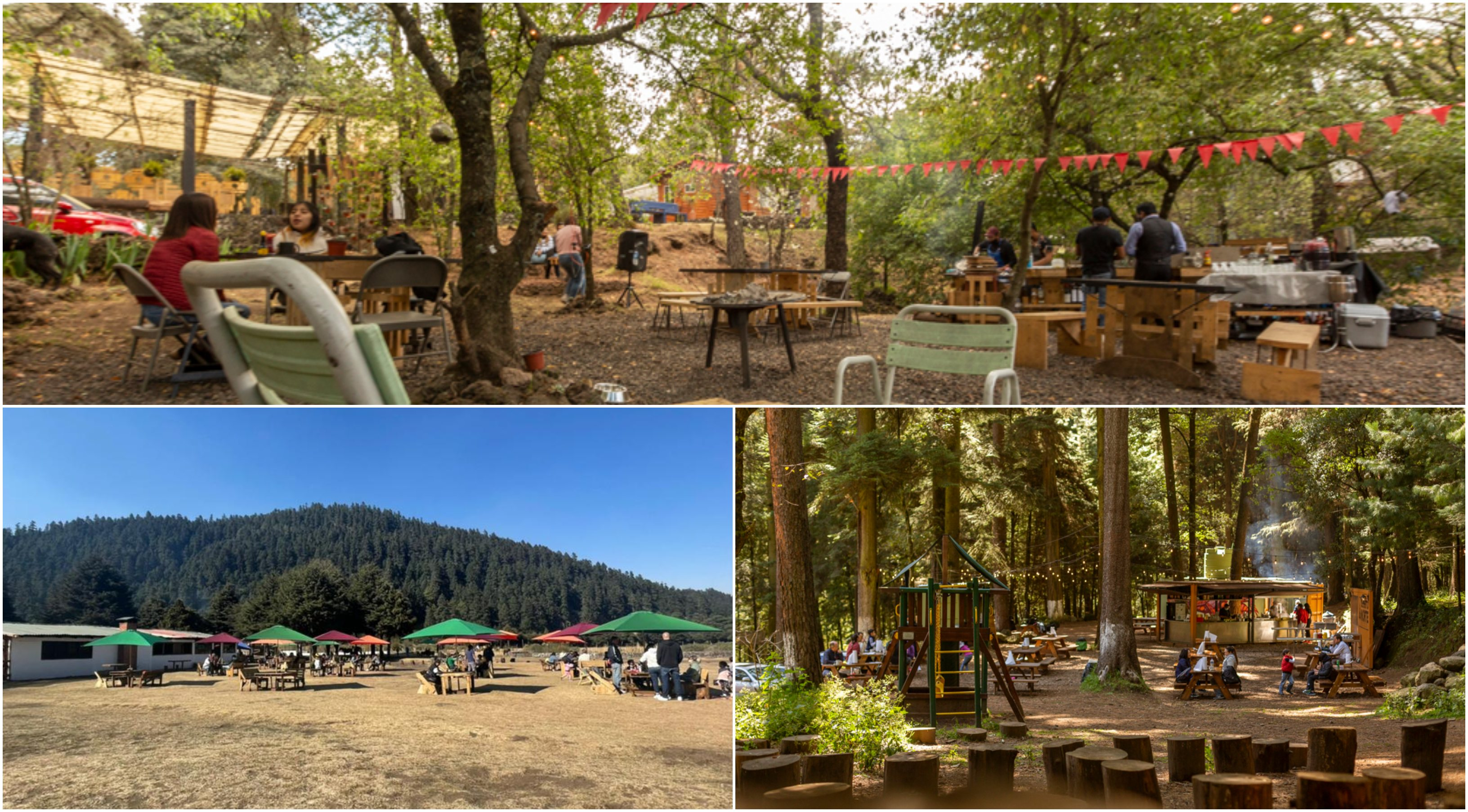 ¡Come en el bosque! Restaurantes escondidos entre árboles
