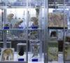 los-9-museos-mas-raros-en-la-cdmx-fetos-pasteles-y-mapas