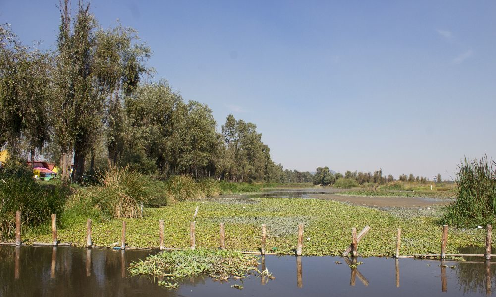aquatic-lily-in-xochimilco-from-plague-to-sustainable-product