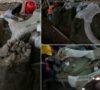 fotos-asi-son-los-mamuts-que-reinaron-tierras-chilangas