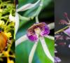 exposicion-y-venta-de-orquideas-en-el-museo-franz-mayer