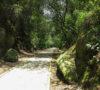 cdmx-a-pedal-dos-rutas-a-descubrir-sobre-tu-bicla