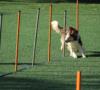 eso-no-firulais-5-lugares-para-entrenar-perritos-en-cdmx-%f0%9f%90%b6