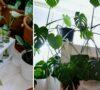 plantas-colgantes-enredaderas-y-guias-faciles-de-cuidar-%f0%9f%a4%a9