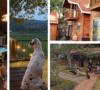 4-cabanas-pet-friendly-a-menos-de-tres-horas-de-la-cdmx