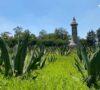 7-jardines-culturales-en-cdmx-para-ir-con-ninos-%f0%9f%8c%b1